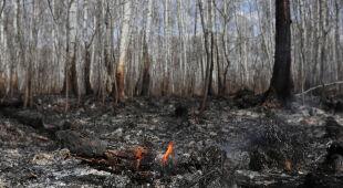 Ornitolog Adam Zbyryt o sytuacji ptaków w związku z pożarem Biebrzańskiego Parku Narodowego