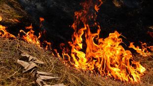 Ludzie w szpitalach, pożary, ginące zwierzęta. Australia zmaga się z falą upałów
