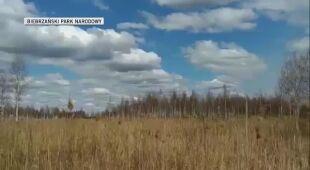 Do walki z ogniem wykorzystywane są samoloty gaśnicze (Biebrzański Park Narodowy)